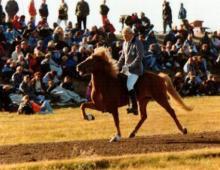 fjolvi-fra-blondosi-a-lm-1990-10-saeti-i-a-flokki-gaedinga-jpg