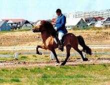 odur-fra-brun-og-hinni-a-hvitasunn-1995-saeti-6-vetra-jpg