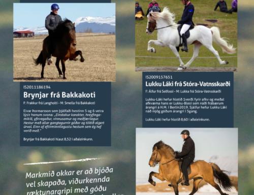Stóðhestar til afnota á Árbakka 2020