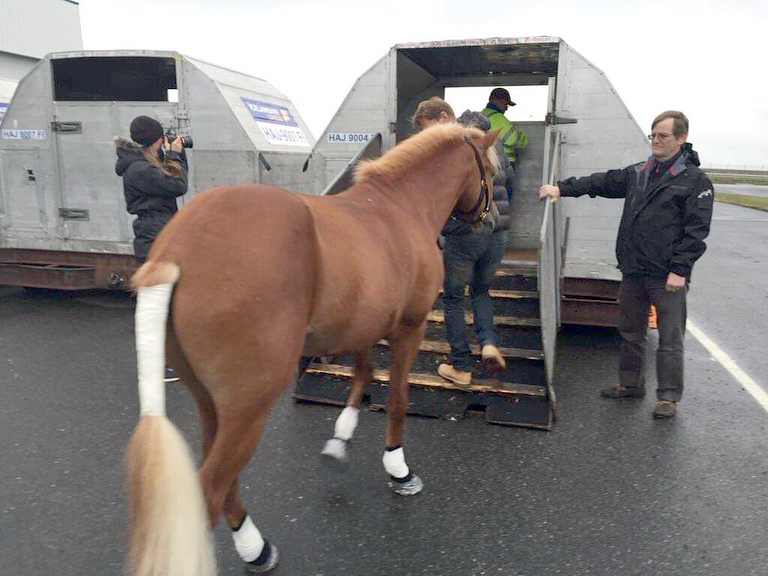 Horse Exporting